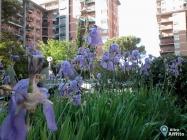 Appartamento Quadrilocale a Firenze (2)